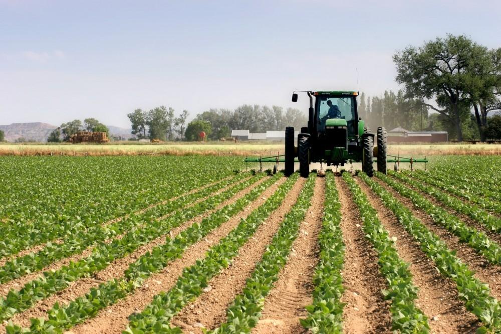 Şamaxıda 2477 hektarda yazlıq bitkilərin əkini başa çatdırılıb