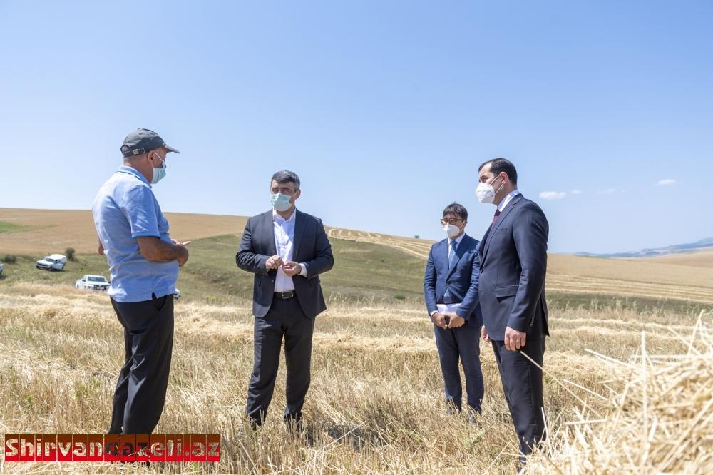 Nazir İnam Kərimov Şamaxının dağlıq ərazilərində müasir kombaynlarla taxıl biçininin aparılması prosesində iştirak edib